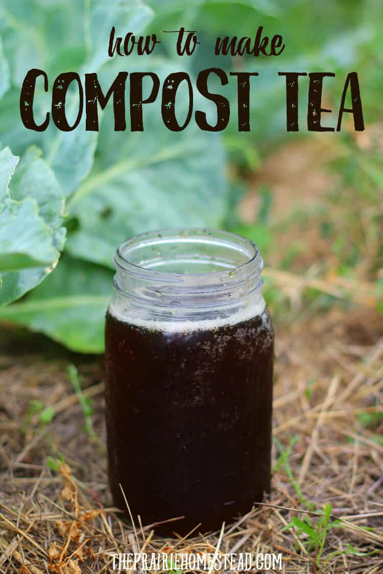 homemade compost tea recipe