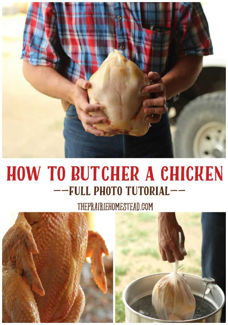 how to butcher a chicken tutorial
