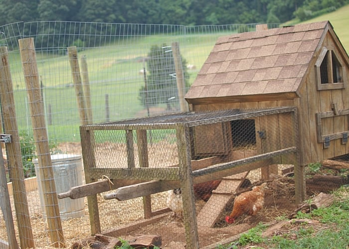 How to Build a en Run • The Prairie Homestead Hen House Design For Many Hens Html on