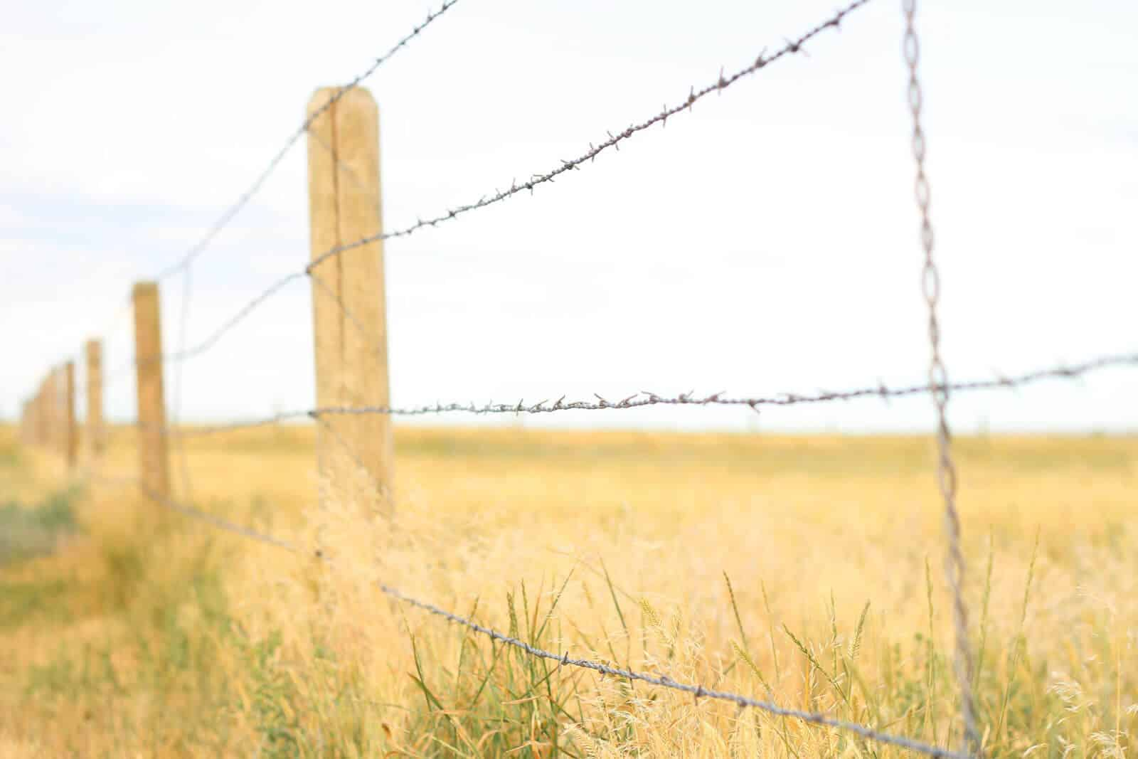 What Homesteading Really Costs... • The Prairie Homestead