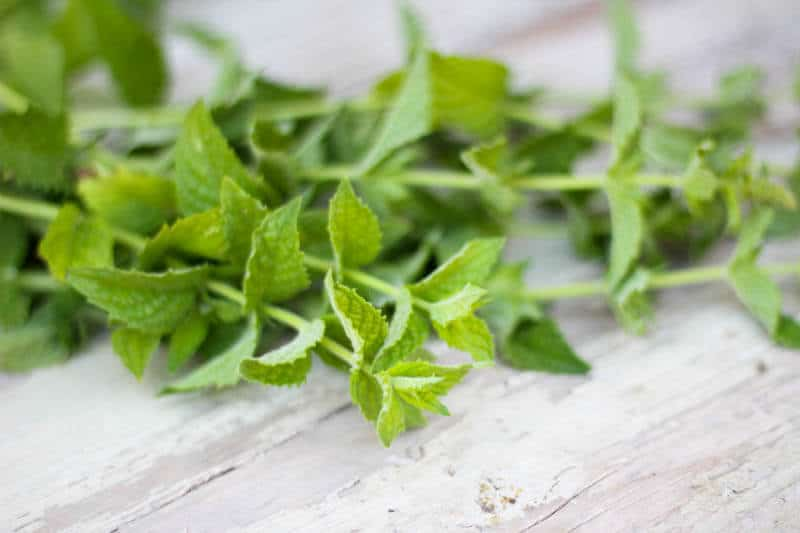 homemade mint syrup recipe with homegrown mint
