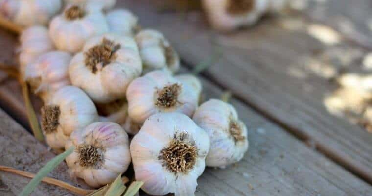 braiding garlic at home