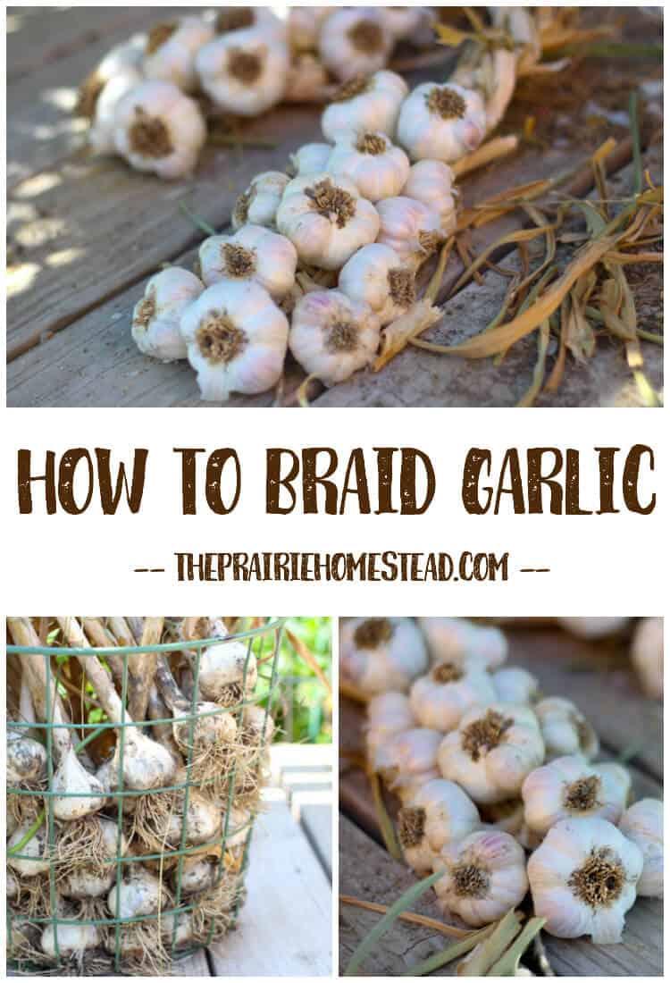 how to braid garlic