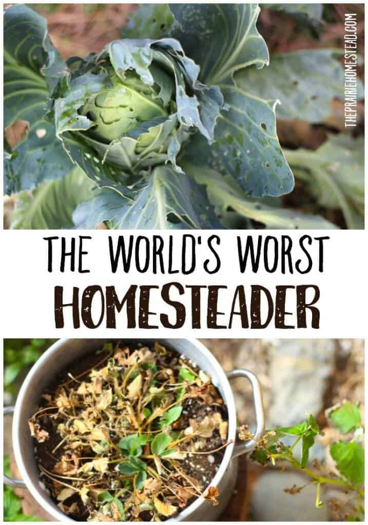 what to do when you're a big fat homesteading failure
