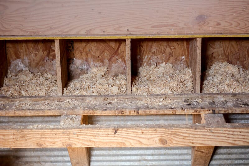 nesting boxes in chicken coop