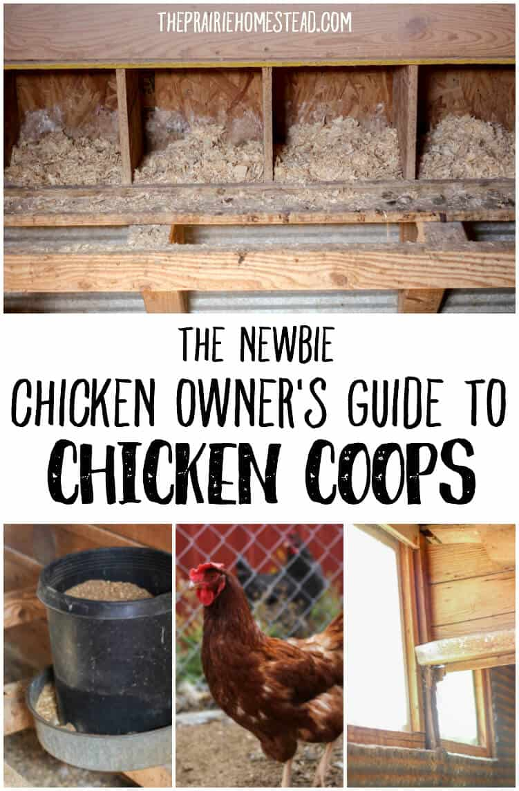 guide to chicken coops