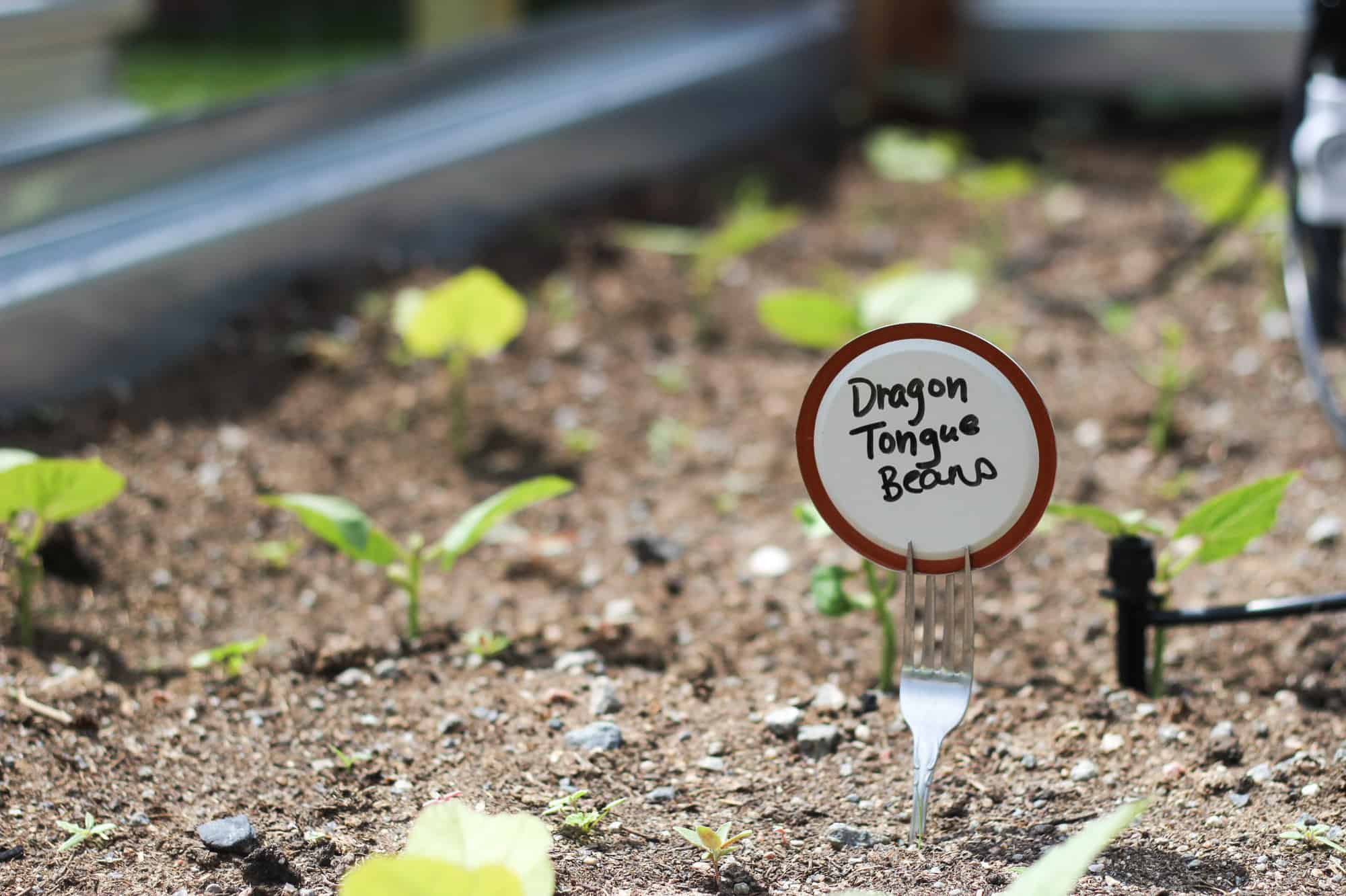 raised bed garden tour