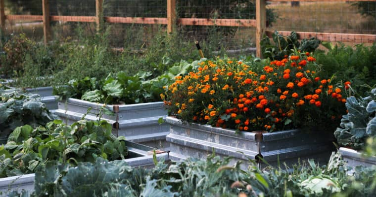 Preparing Our Raised Beds for Spring Planting