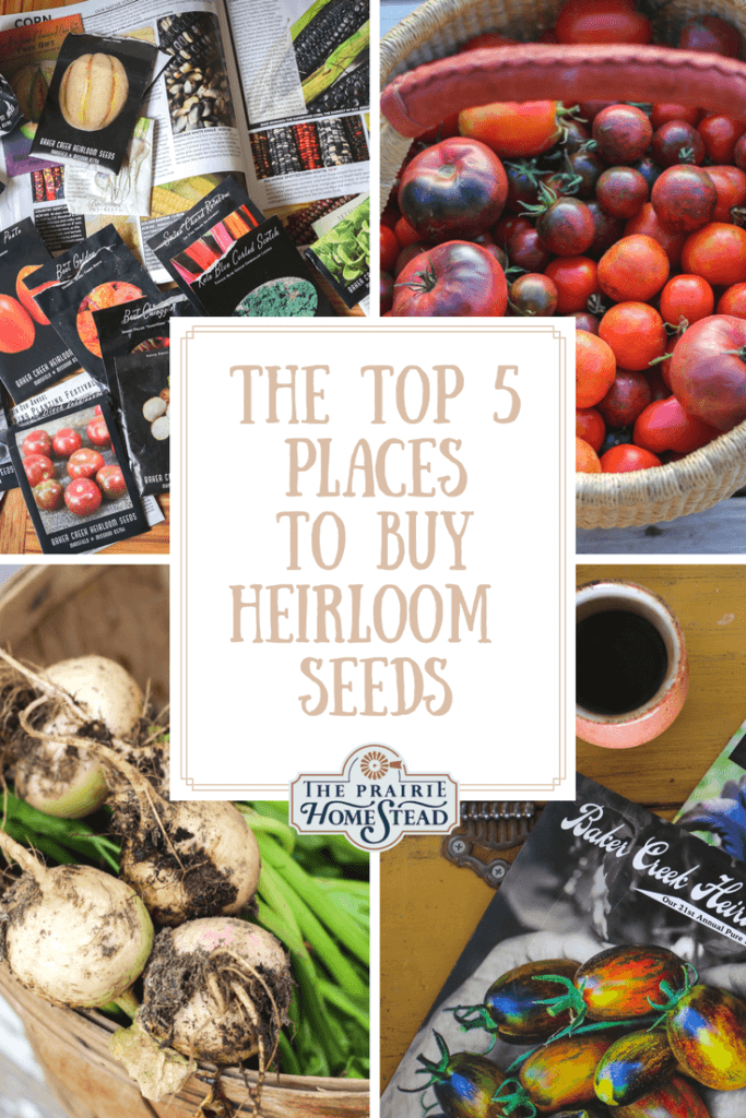 best places to buy heirloom seeds