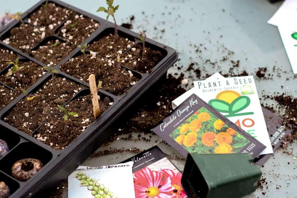 planting heirloom seeds