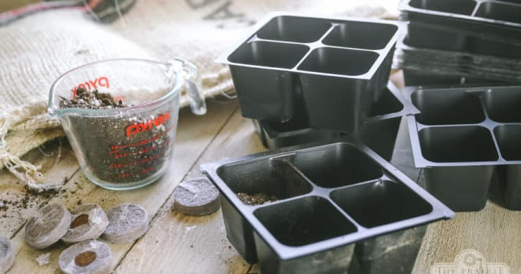 How to Disinfect Seed Trays