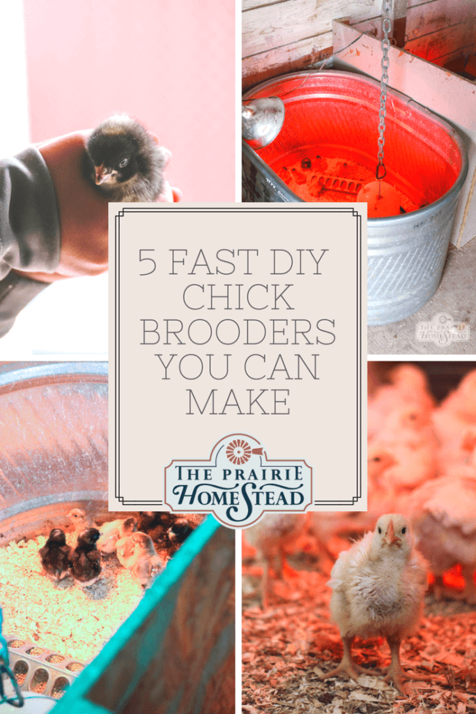 5 fast diy chick brooders you can make