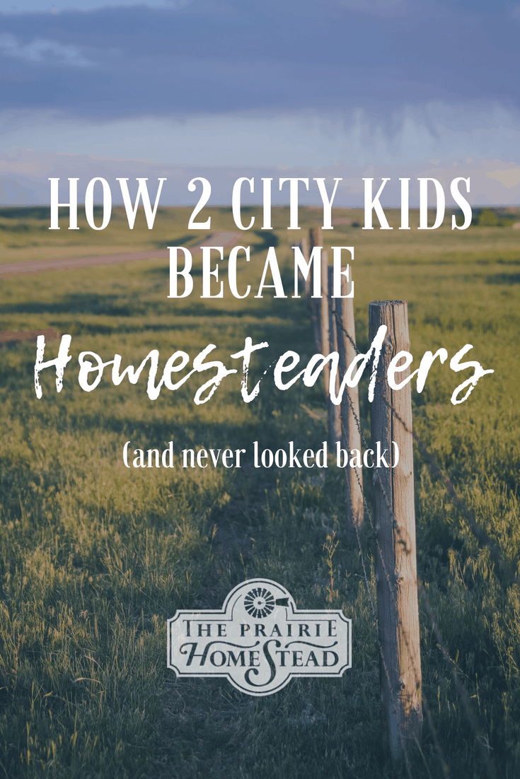 city kids turned homesteader