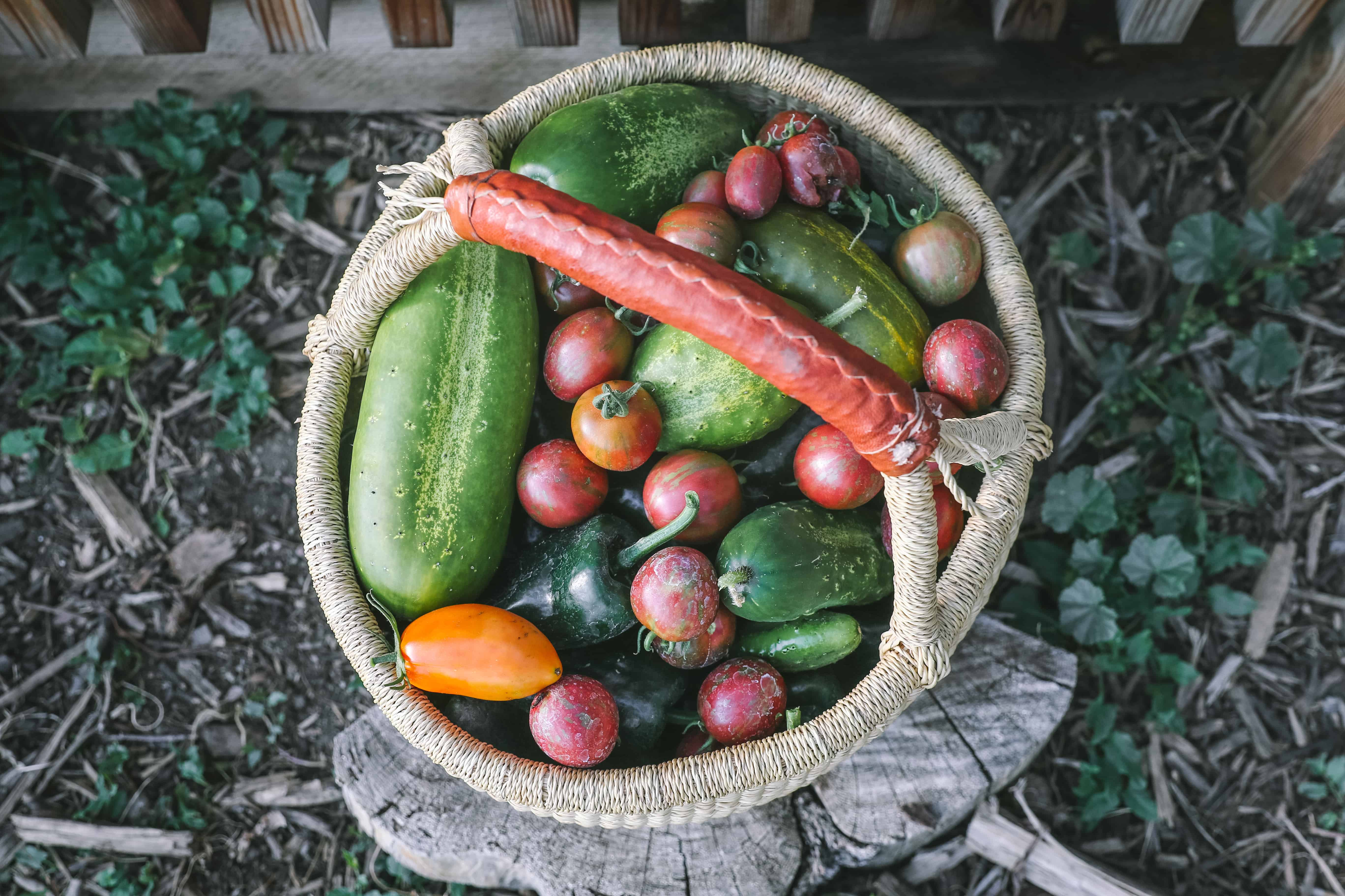 organic garden harvest basket