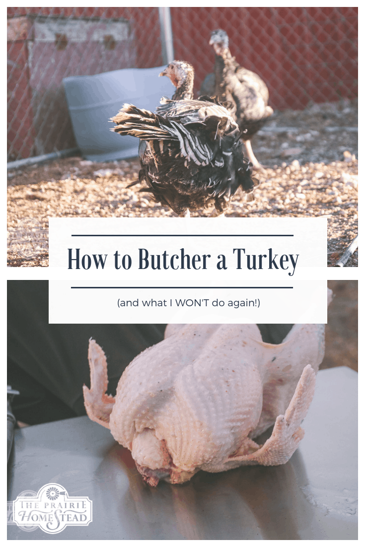 Step-by-step how to butcher a turkey (and two things I won't do again!)