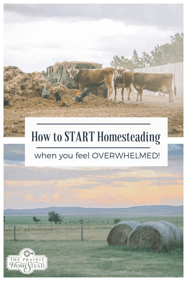 how to start homesteading when you feel overwhelmed