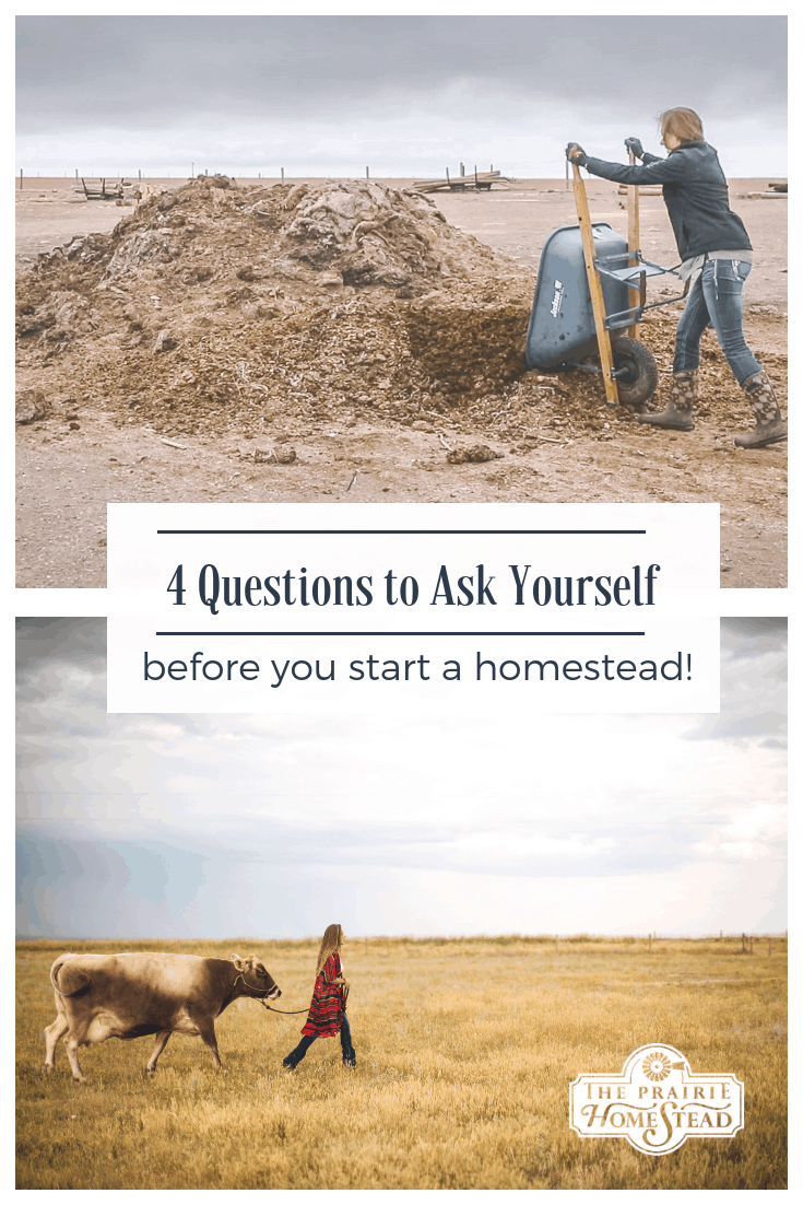 4 questions to ask yourself before you start your homestead