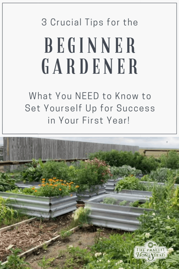 3 things every beginner gardener needs to know