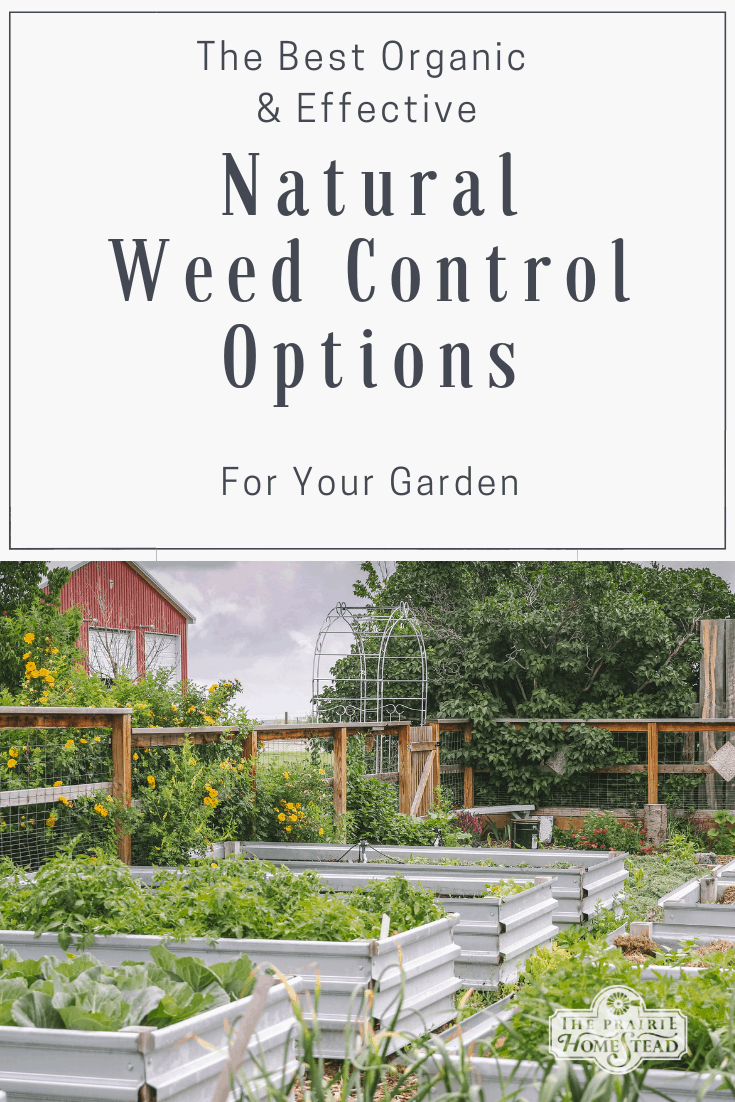 Effective Natural Weed Control For Your Garden