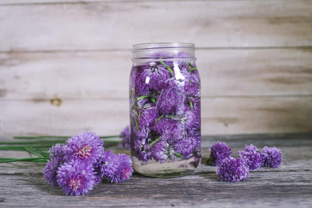 chive blossom vinegar recipe