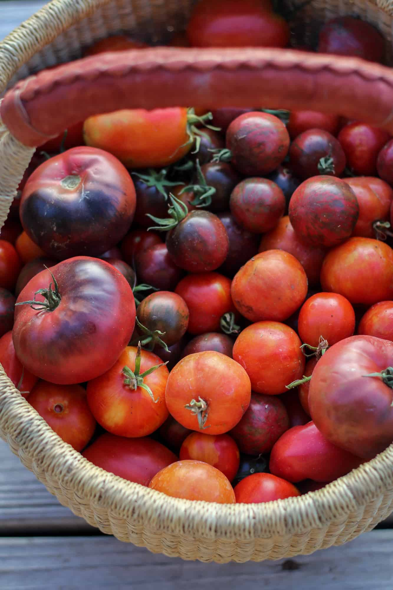 homegrown tomatoes in a basket