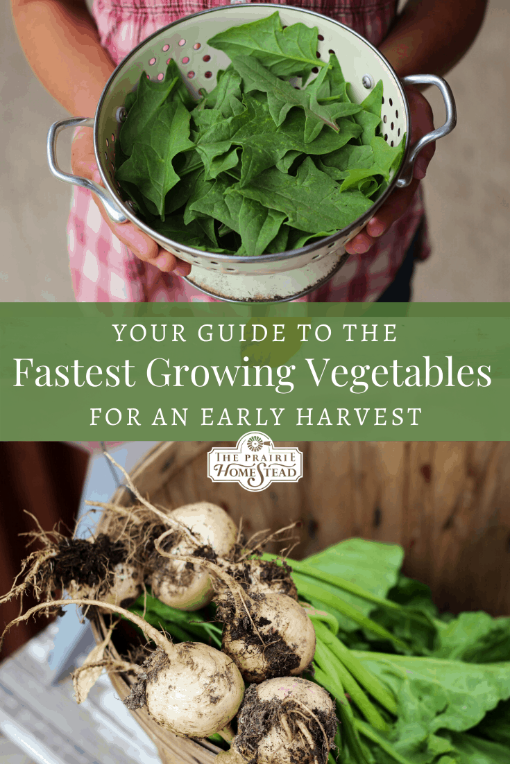 fastest growing vegetables for an early harvest