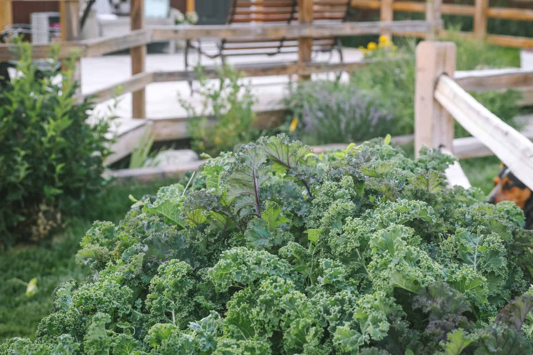 fast growing vegetables for an early harvest