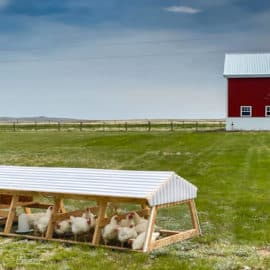 chicken tractor in pasture