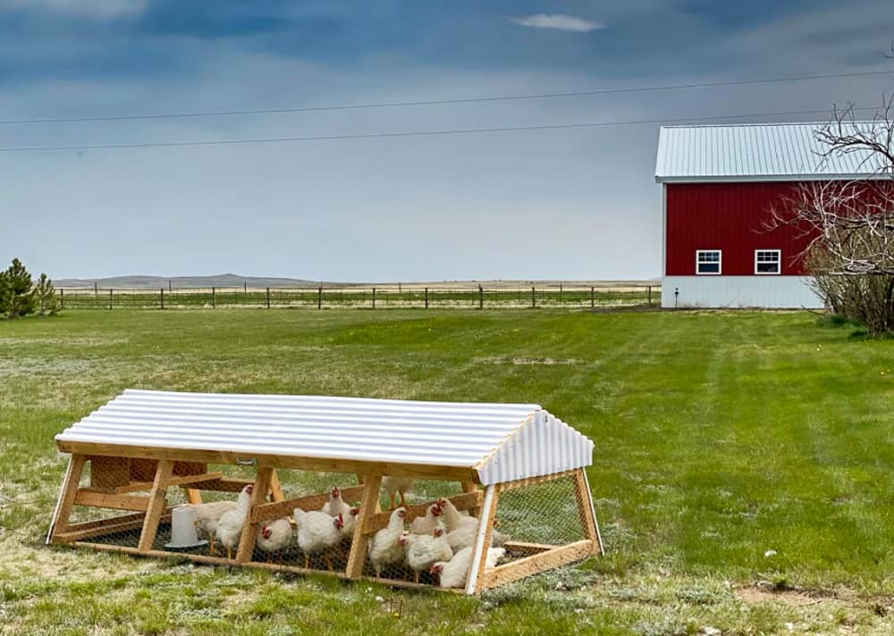 chicken tractor in pasture