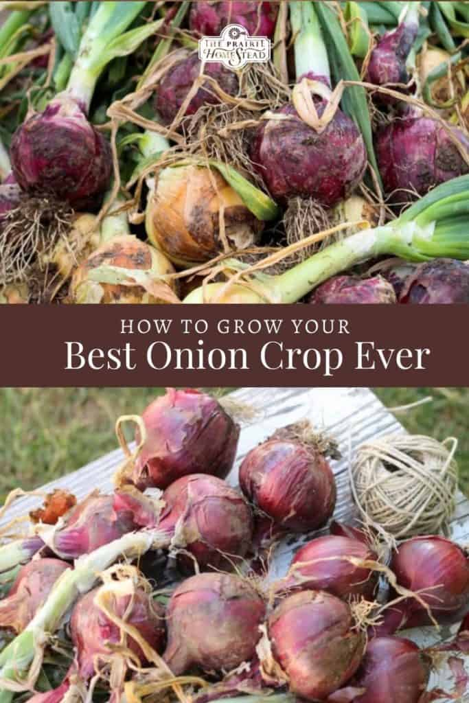 how to grow your best onion crop ever