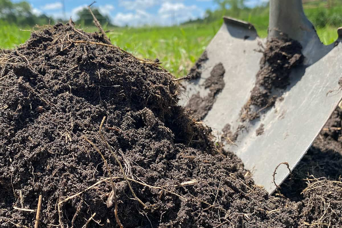The Best Organic Fertilizers   Compost
