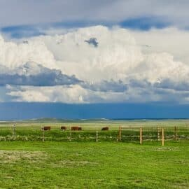 How to Cultivate Community on a Homestead (our prairie)