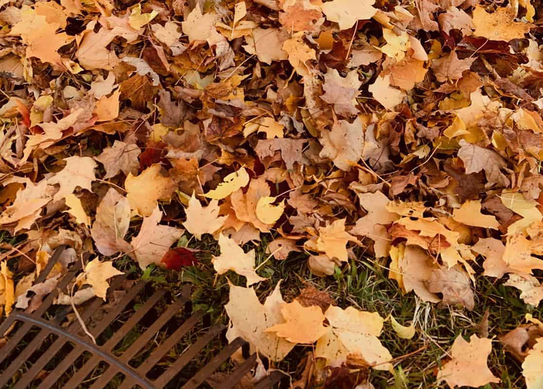 Planting Your Fall Garden