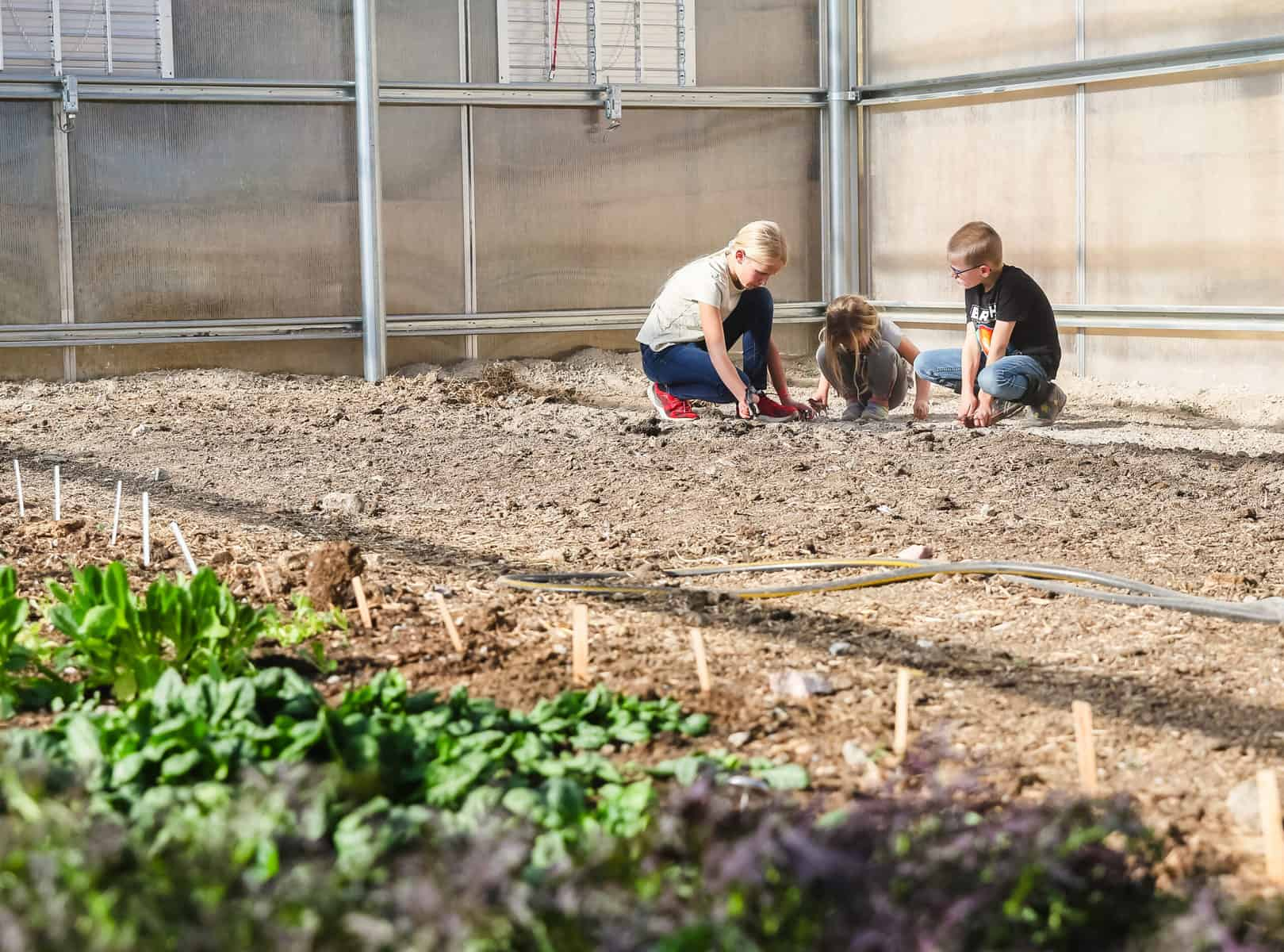 Homesteading with Kids Working in the Greenhouse