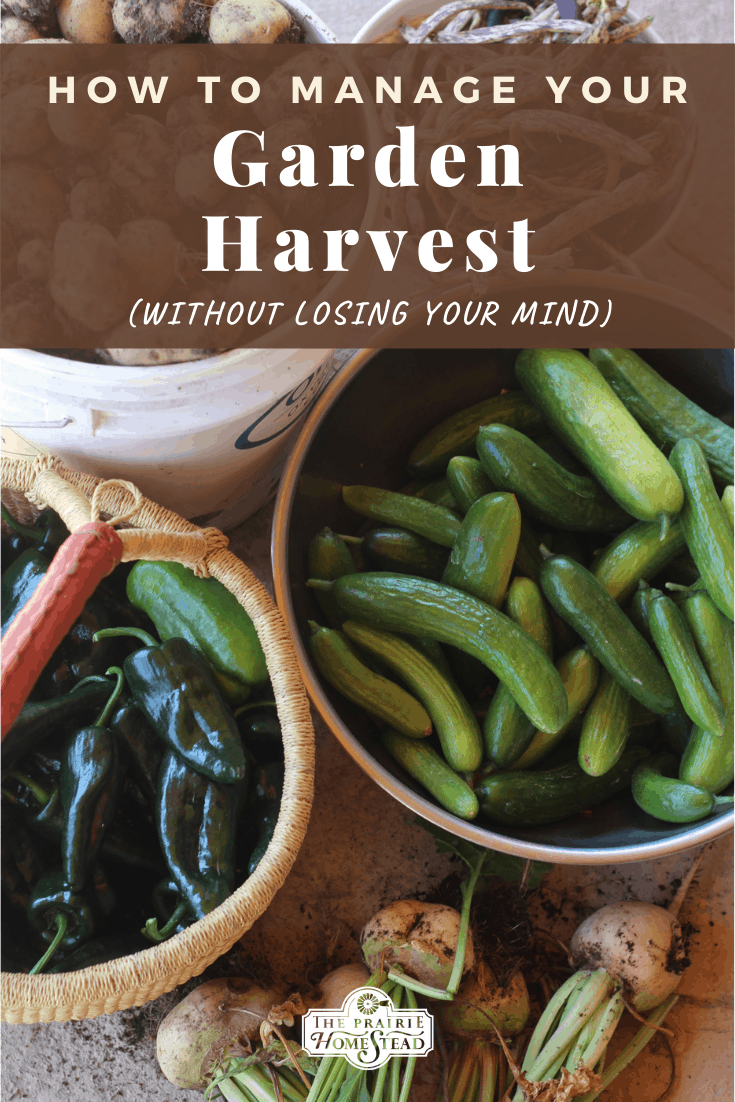 How to Manage Your Garden Harvest