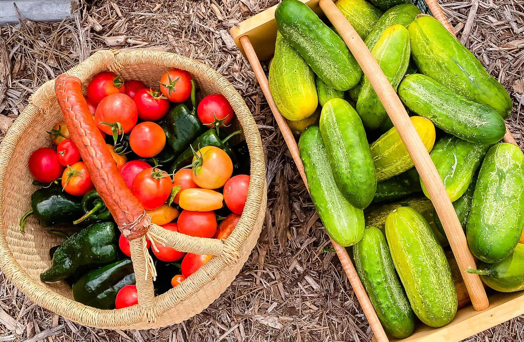 Planning for Your Garden Harvest